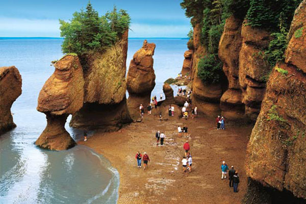 fundy walking ocean floor
